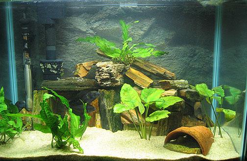 Cichlid Fish Tank Cichlid Tank